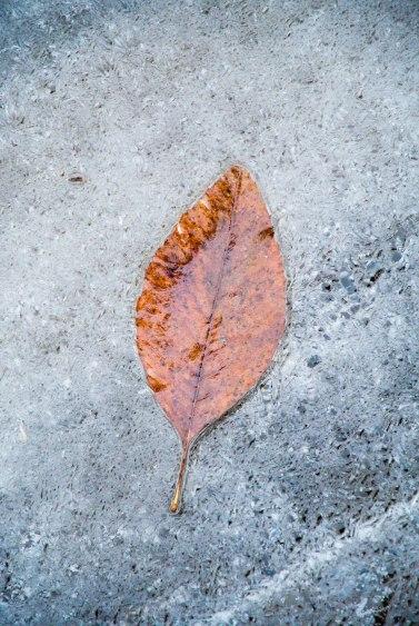 east branch leaf