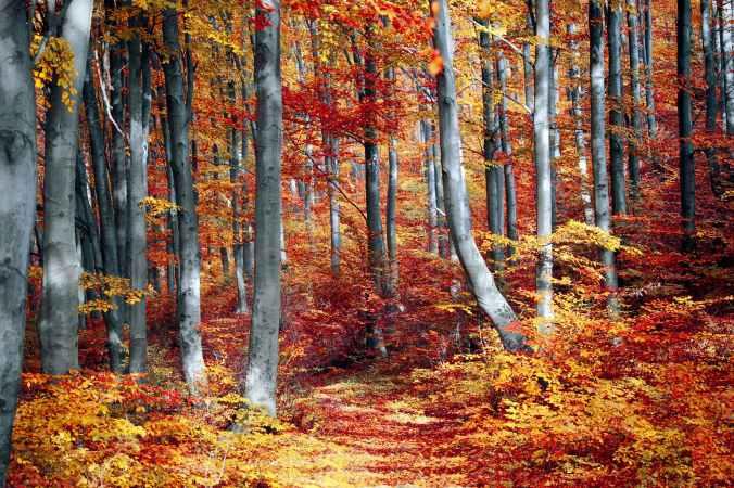 art autumn autumn leaves beautiful